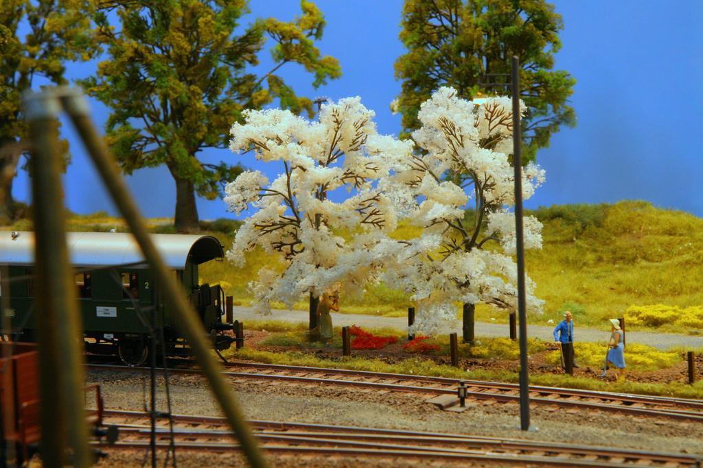 Blühende Kirschbäume - bald ist es wieder soweit