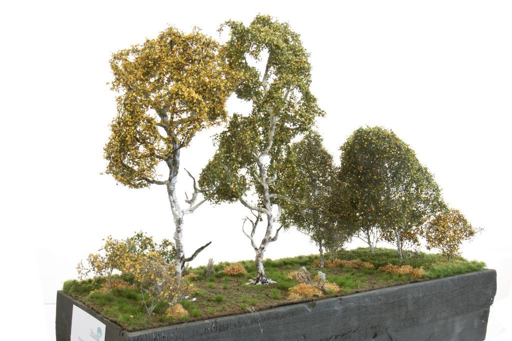 Silhouette Birke und Birkenbüsche mit Herbstlaub