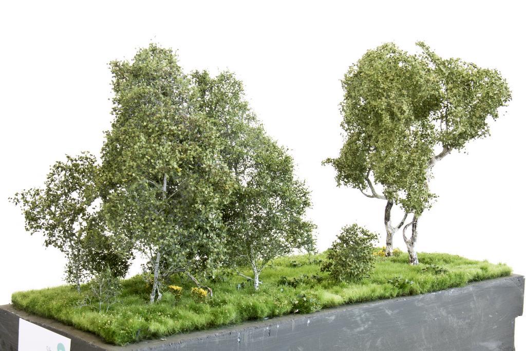 Silhouette Birke und Birkenbüsche