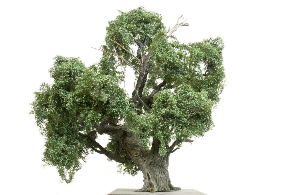 Silhouette halb abgestorbener Eichenbaum